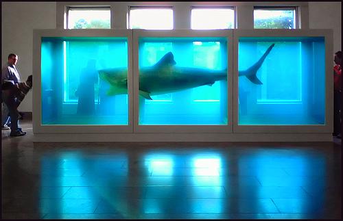 Dead Shark Art Collectible